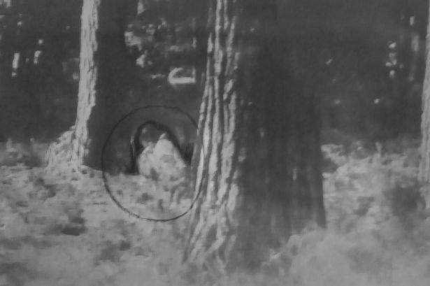 Маленькая девочка в лесу порно