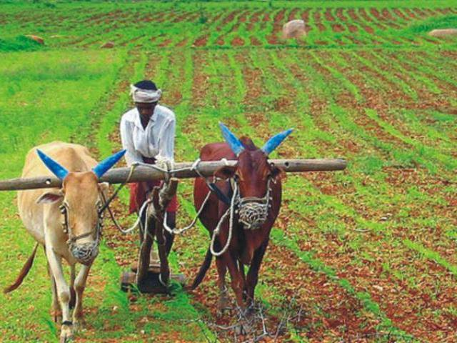 agriculture sector in india