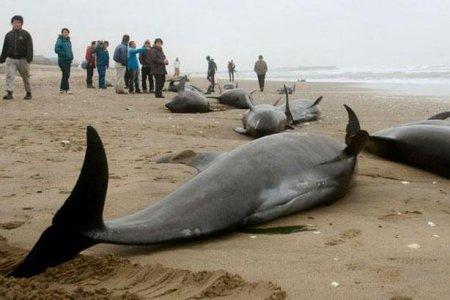 В японии дельфины массово