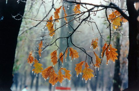 18 ноября - праздники, именины, народные приметы