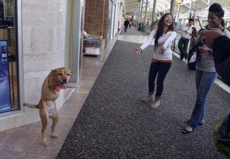 Двуногая собака Вера. ФОТО