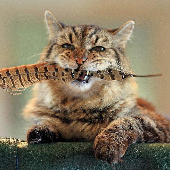 Самый стары кот на земле