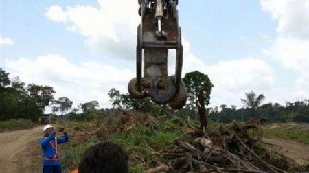 В Бразилии обнаружили гигантскую анаконду. ВИДЕО