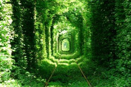 1460957196_10 Природні чудеса України - мальовничі пейзажі. ФОТО