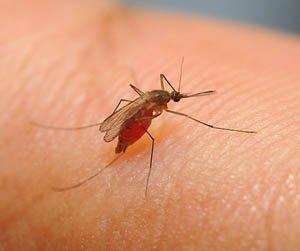 как защитить себя от паразитов
