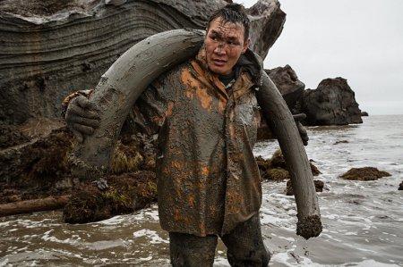В Якутии до сих пор ведется охота на мамонтов. ВИДЕО