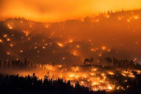 Засуха в Калифорнии погубила более 100 миллионов деревьев