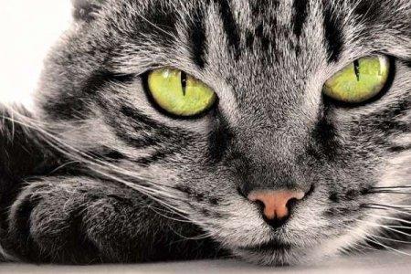 Кішка – показник благополуччя людини