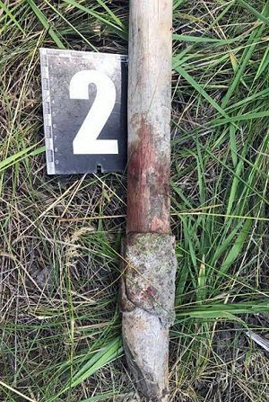 В Одесі жорстоко вбили 17-річну дівчину
